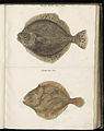 Animal drawings collected by Felix Platter, p1 - (41).jpg
