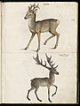 Animal drawings collected by Felix Platter, p2 - (132).jpg