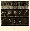 Animal locomotion. Plate 167 (Boston Public Library).jpg