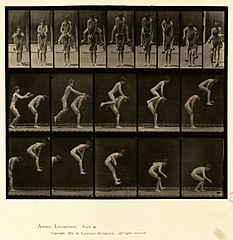 Animal locomotion. Plate 167 (Boston Public Library).jpg