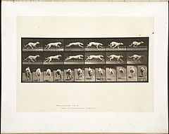 Animal locomotion. Plate 709 (Boston Public Library).jpg