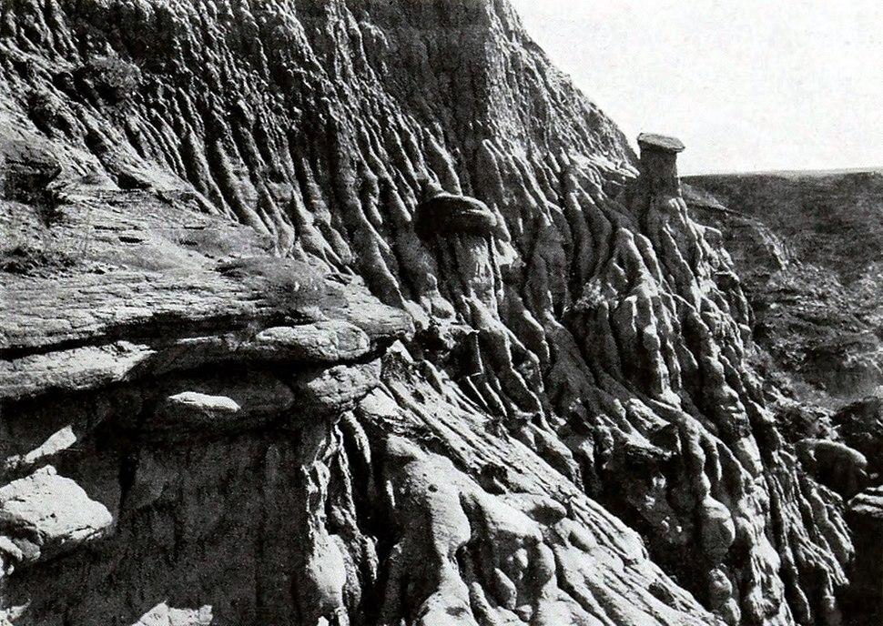 Ankylosaurus excavation