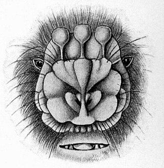Flower-faced bat - Image: Anthops ornatus