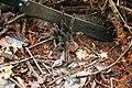 Aranha tarantula - panoramio.jpg