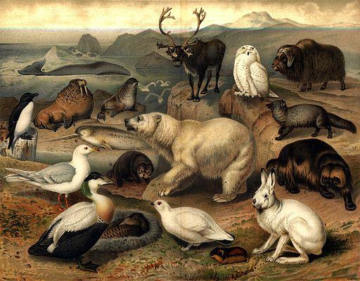 Arktisk fauna, Nordisk familjebok