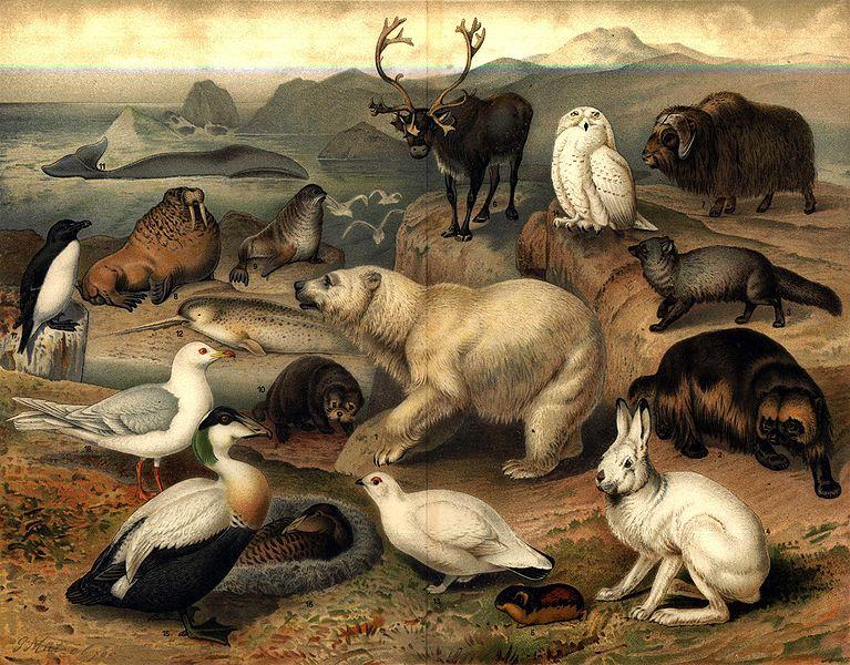 Medio ambiente: La Flora, Fauna y Suelo