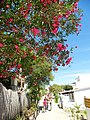 Armona Island (Portugal) (49224729386).jpg