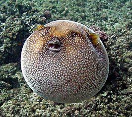 tropische vissen wikipedia
