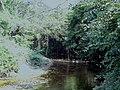 Arroyo en el camino de la Topada de la flor. - panoramio.jpg