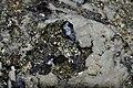 Arsénopyrite et pyrite 1 .jpg
