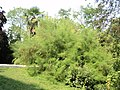 Asparago - panoramio.jpg