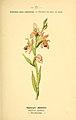Atlas de poche des plantes des champs, des prairies et des bois (Page 76) (6022582342).jpg