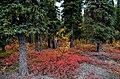 Autumn 2018 in Denali (44343571934).jpg