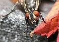 Autumn Fly 2 (14969872664).jpg