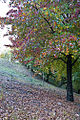 Autumn Leaves (1905550706).jpg