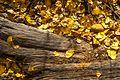 Autumn colours in SW Utah - lower Cedar Canyon road (15033138074).jpg