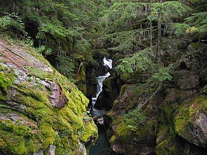 Trail of the Cedars - Avalanche Gorge