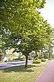 Avenue of Lime Trees, Bramley Parade, London N14 - geograph.org.uk - 811573.jpg