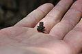 Baby Frog.jpg