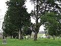 Bakerville Tennessee Cemetery.jpg