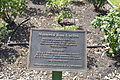 Balranald Memorial Rose Garden 002.JPG