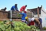 Banana farmers, Zimbabwe (39695820082).jpg
