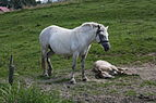 Bandrów Narodowy - Horses.jpg