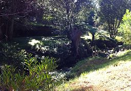 Bardwell Creek near Ellerslie Road Bexley North NSW 2012.jpg