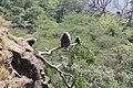 Baruti East, Nakuru, Kenya - panoramio (1).jpg