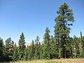 Battle Mountain Oregon forest (6028400836).jpg