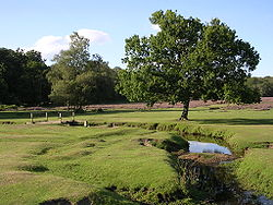 Beaulieu river at longwater lawn.jpg