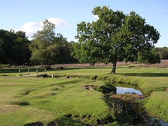 Beaulieu River - The Beaulieu River at Longwater Lawn, near Lyndhurst