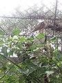 Beauty of Nature 140453.jpg
