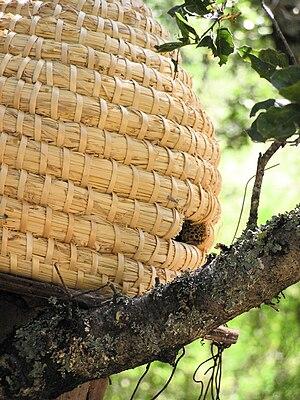 Beehive (p7020068)