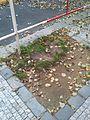 Belgická (Praha), stromy (008).jpg