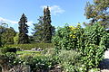 Bergianska trädgården - Stockholm, Sweden - DSC00307.JPG