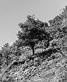 Bergtocht van Val Sinestra naar Ramosch 15-09-2019. (actm.) 22.jpg