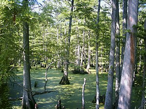 Big Cypress Bayou (Wetland) - Big Cypress Bayou in Jefferson, Texas off U.S. Route 59.