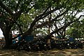 Bike parking in Fort Kochi, India, 2 March 2019.jpg