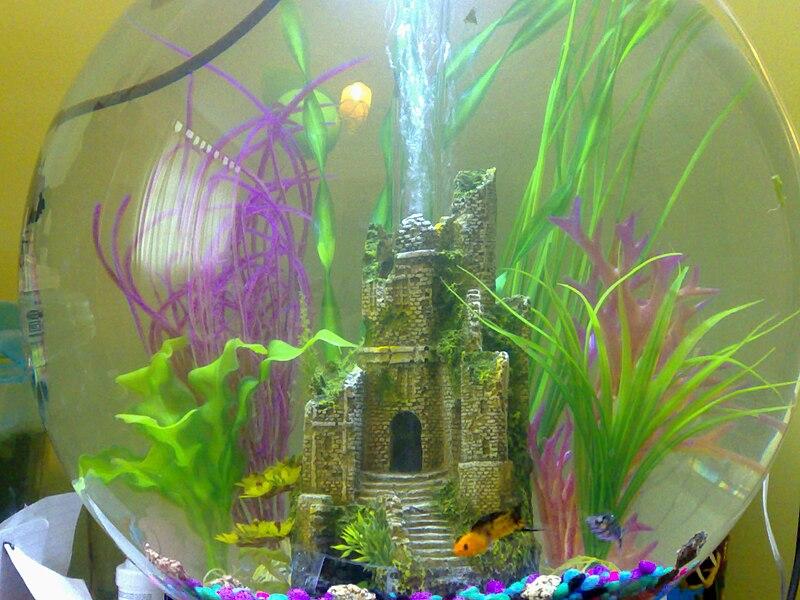 File:Biorbfishtank.jpg