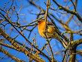 Birds - 28283231582.jpg