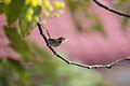 Birds 014 (6789341918).jpg