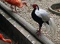 Birds in Zoo Negara Malaysia (6).jpg