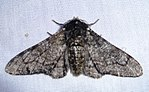 Natural Selection Moth Lab Answers