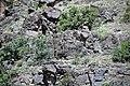 Black Canyon Schist (Paleoproterozoic, 1.759 Ga; No Thoroughfare Canyon, Colorado National Monument, Colorado, USA) 1 (23938787545).jpg