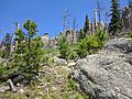 Black Elk Peak hike 11.jpg