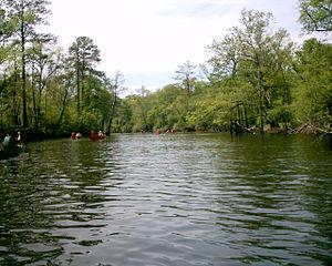 Blackwater River (Virginia) - Image: Blackwater River Canoe 4