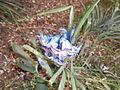 Blaue Blume im März.JPG