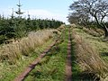 Blawhorn Nursery Forest - geograph.org.uk - 402224.jpg