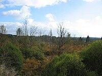 Blick ins Hohe Venn bei Sourbrodt von der Vennbahntrasse aus.jpg